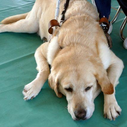 バリアフリー化 「義足」と「補助犬」