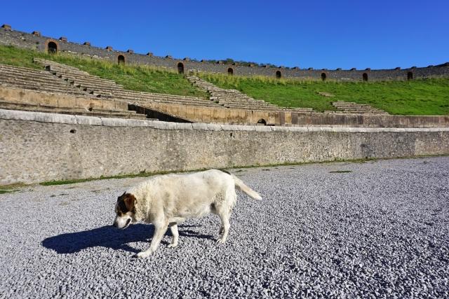 現代と古来の犬たちのイメージ